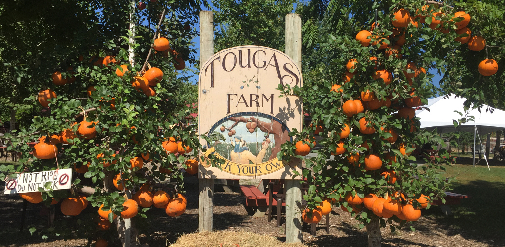 Image result for tougas family farm